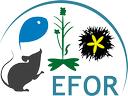 9th annual meeting EFOR